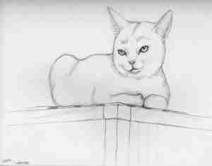 drawing of a white cat on a shelf