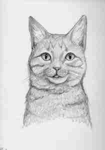 drawing of a cat with his tongue out