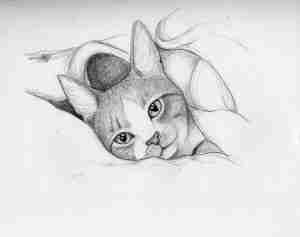 drawing of a tabby cat in a blanket