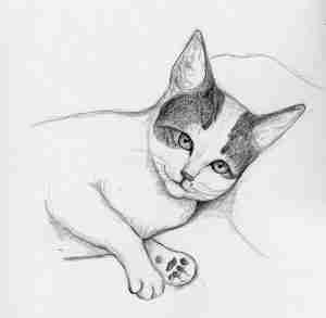 drawing of a white and tabby cat